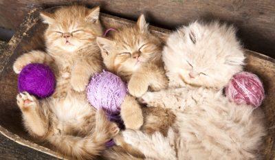 cum elimini mirosul din litiera pisicii
